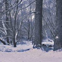 Голубой лес. :: Oleg4618 Шутченко