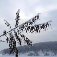 зимнее утро :: Наталья Тимофеева