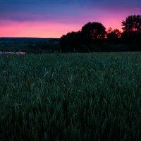 Уходящий день в поле :: Dmitriy Stoyanov