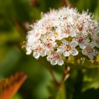 Полевые цветы :: Dmitriy Stoyanov