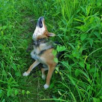 Заели собаки ! :: Святец Вячеслав