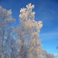 Стоят деревья в белье кружевном. :: nadyasilyuk Вознюк