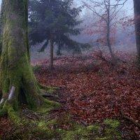 в темно-синем лесy :: Elena Wymann
