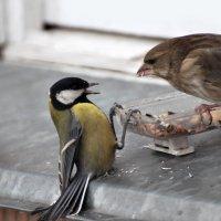не подходи! :: linnud