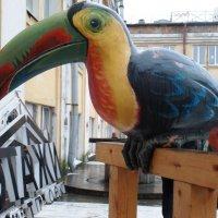"Птица ""Говорун""... :: Марина Харченкова"