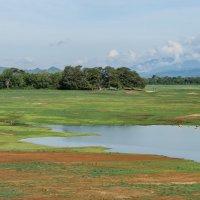 Национальный парк Удавалаве. :: Edward J.Berelet