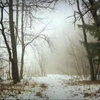 В лесу! :: Владимир Шошин