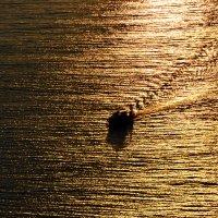 Прогулка по золотому морю :: Ольга Голубева