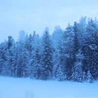 Морозное утро :: Наталья Пендюк Пендюк