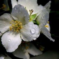 Была весна.... :: Валерия  Полещикова