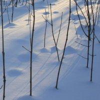 Зима  была..... :: Валерия  Полещикова