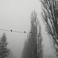 туман :: Руслан Моисеенко
