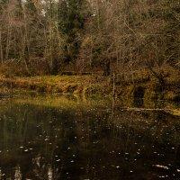 Река-Осень :: andRUSha PetrOFF