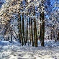 В зимнем парке. :: Василий Ярославцев