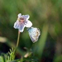 Цветок  и  бабочка :: Геннадий С.
