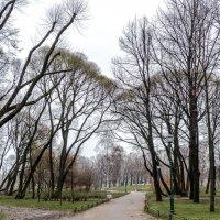 Парк Таврического дворца :: Виктор Орехов