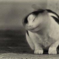 ночной котейка :: Ардалион Иволгин