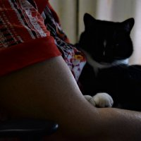 Мама и кот :: Anastasia М