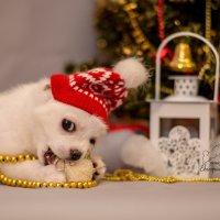 Новогодний Снеговик :: Катерина Терновая