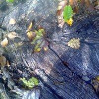 старая древесина :: Александр Прокудин