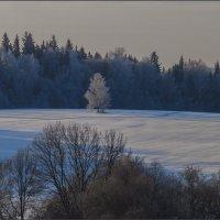 Морозное утро... :: Наталья Rosenwasser