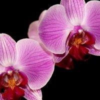 МИЛЫМ ЖЕНЩИНАМ! Мужчины, дарите женщинам цветы. По поводу и без повода! :: kolin marsh
