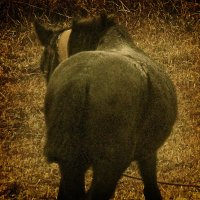 Мокрая лошадь :: Леонид Шаян