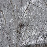 гнездо зимой :: Galina