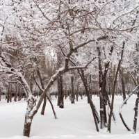 Снежно, морозно :: Miss Perfectness