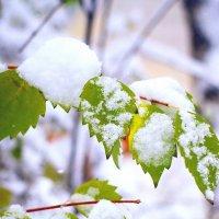 Зимнее лето :: Сергей Афанасьев