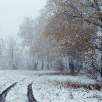 Туманное утро в зимнем лесу :: Игорь Пименов