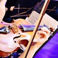 Скрипка :: Yelena LUCHitskaya