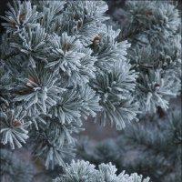Предвкушение зимы :: Елена Ерошевич