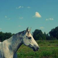 Серый :: Алёна Бадьина