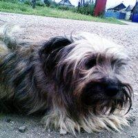 Пёс барбос :: Владимир Ростовский