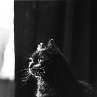 Медитация черного кота ... :-) :: Ольга Винницкая (Olenka)