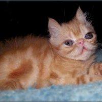 Котенок...Просто маленькая кошка.. :: Людмила Богданова (Скачко)