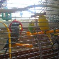 папуги :: Ксюшка Земляничкина