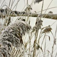 Зимние зарисовки 9 :: Алексей Масалов