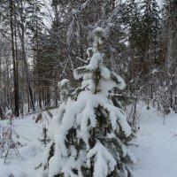 В зимнем лесу :: Галина