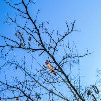 Помните, конфетки на деревьях? :: Юлия