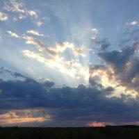 Лучи заходящего солнца :: Вера (makivera)