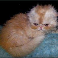 Как назвать котенка?.....))))))))))))...или..УТИБОЗЕМОЙКА...во всей красе...!)) :: Людмила Богданова (Скачко)