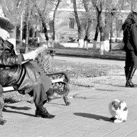 Полезные и вредные привычки :: Игорь Попов