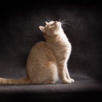 мама кошка :: Елена Волгина
