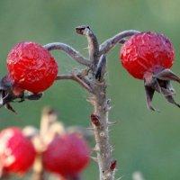 Декабрь :: azer Zade