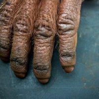 Пальцы :: Марина_1975 -