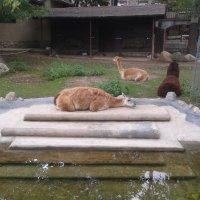 Зоопарк :: Сергей