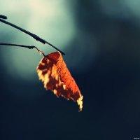 Зимний лист :: Swetlana V
