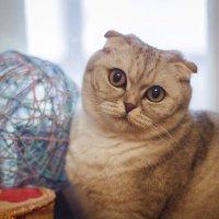 Кошка :: Chapora Sun